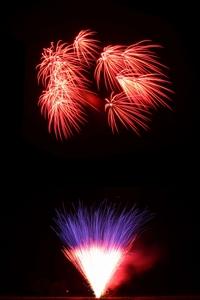 Rote Päonien mehrfach geschossen, dazu ein rot-lila Feuertopf für das Volksfest Musikfeuerwerk.